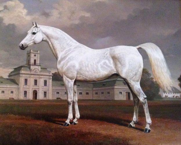 polskiearaby.com :: 235 lat polskiej hodowli prywatnej koni czystej krwi. Czy pamięć udało się wymazać?