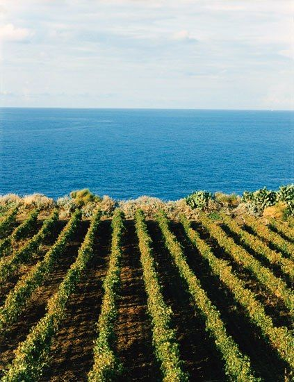At Capofaro, vines which produce malvasia—the classic dessert wine of Salina—edge the sea.