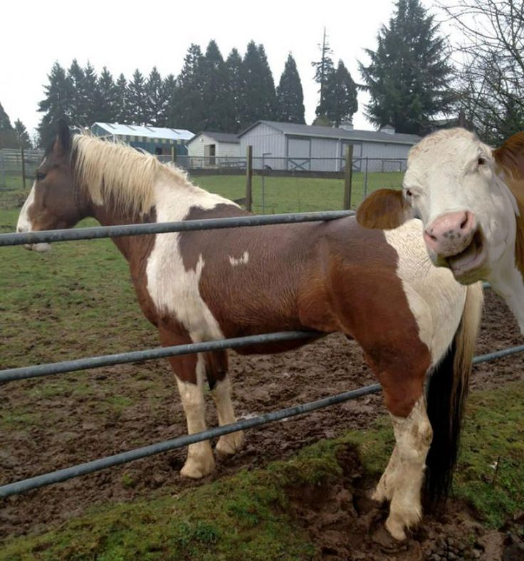 20 Hilarious Animals Who Are Experts At The Art Of Photobombing http://www.wimp.com/animals-photobombing/