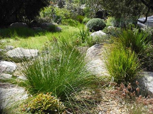 137 best Gardens images on Pinterest Australian native garden