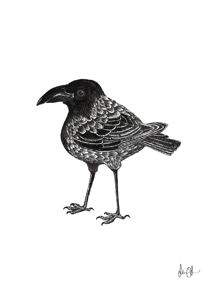 Baby crow by Mia Olofsson
