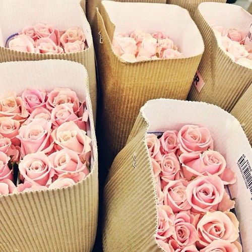bags of pink roses