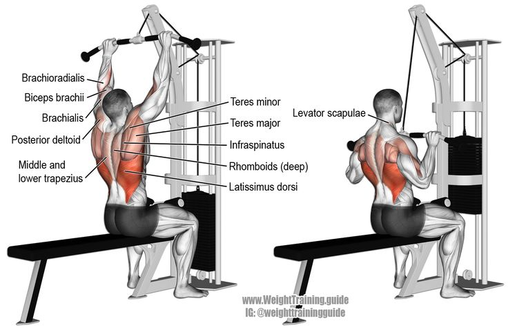 Medium grip lat pulldown. Visit site to learn why a medium grip is best for the lat pulldown. Target muscle: Latissimus Dorsi. Synergistic muscles: Teres Major, Infraspinatus, Teres Minor, Rhomboids, Middle and Lower Trapezius, Brachialis, Brachioradialis, Biceps Brachii, Pectoralis Minor, Posterior Deltoid, and Levator Scapulae.