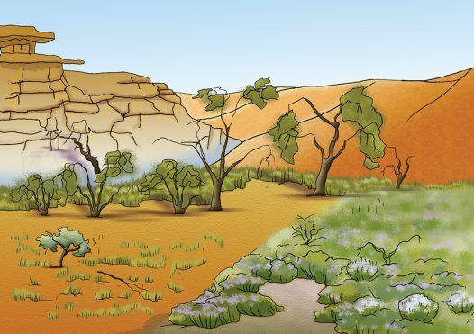 Arid habitats