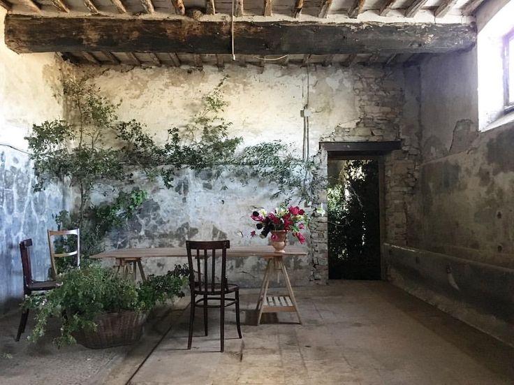 """Mi piace"": 117, commenti: 3 - Giulia Casadei (@juliet_and_other_stories) su Instagram: ""@slowflowersitaly #slowflowersitaly #slowflowers #baronericasoli #sun #sunnyday #flowers…"""