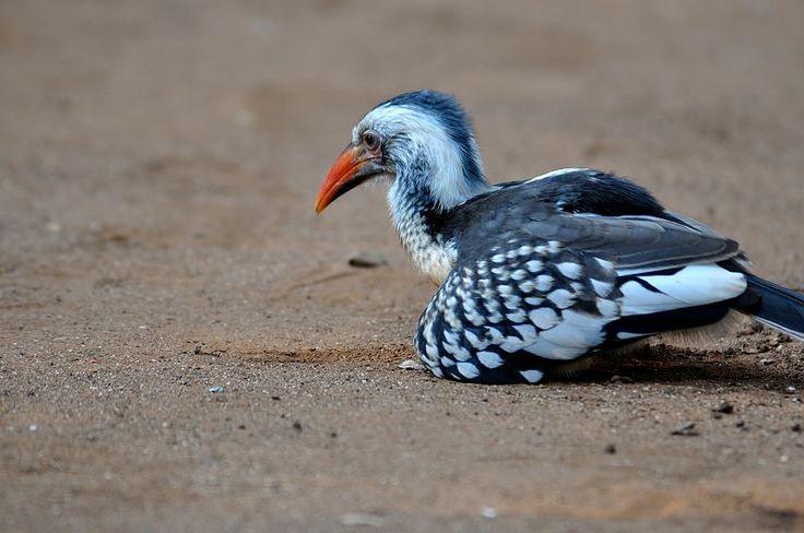 Birds, wildlife, free world, south africa, kruger national park