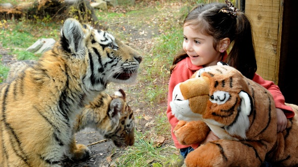 It costs $500 for 10 patients and their guardians to enjoy a day at the Bronx Zoo! Donate today and your contribution could help send a patient on the adventure of a lifetime! http://www.childrenscbf.org/events_detail.php?id=47