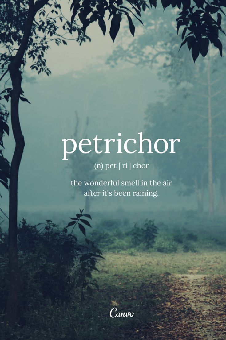 Petrichor The wonderful smell in the air after it s been raining design Perfume QuotesI Love RainInspiring