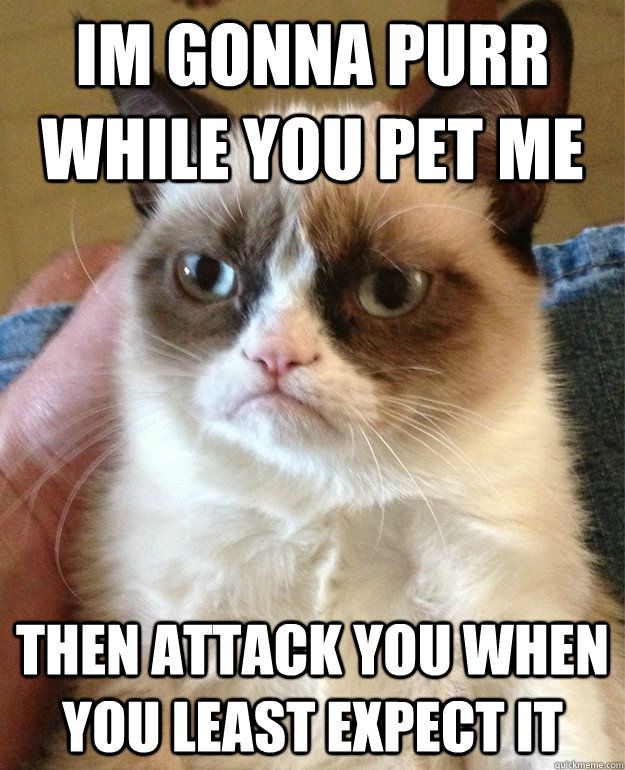 I'm gonna purr while you pet me then attack you when you leas - Grumpy Cat  (My cat does this.  I pet her on the head and she acts like she loves it and then she turns her head around and bites me.  How could I not LOVE her?)