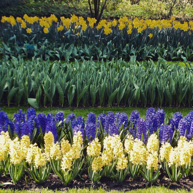 Netherlands. Flowers.