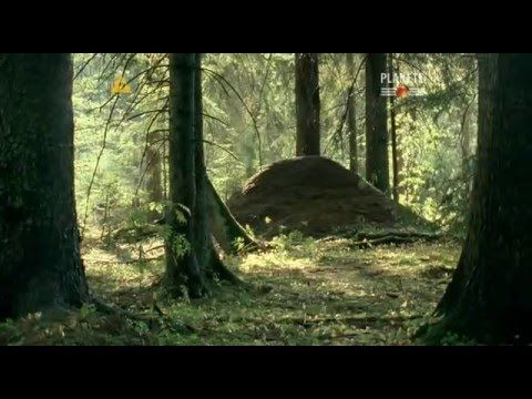 02 Opowieść o mrówce Samotność w tłumie - YouTube