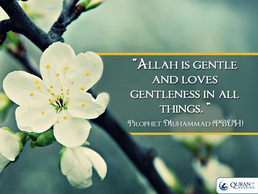 Allah is Gentle ♥ God Consciousness ♥ gentleness and the deepest love ♥