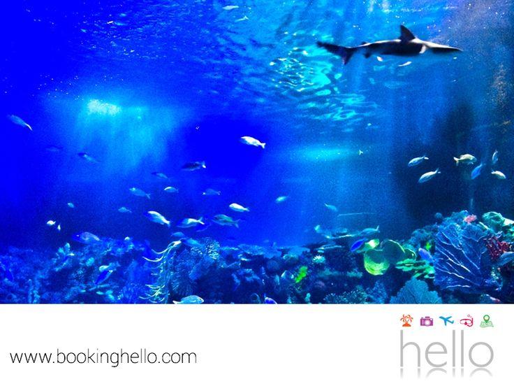 VIAJES EN PAREJA. Si ya adquiriste tu pack Booking Hello al Caribe mexicano, te recomendamos planear una visita al acuario interactivo, donde tú y tu pareja podrán entrar en contacto con tortugas y mantarrayas, así como presenciar un show de delfines y sorprenderse con su gran pecera de tiburones al interior. Esta es una gran opción para disfrutar aún más de los atractivos de este gran destino turístico. #escapatealcaribe
