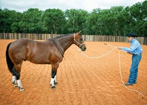 Earn Your Horse's Respect with Clinton Anderson
