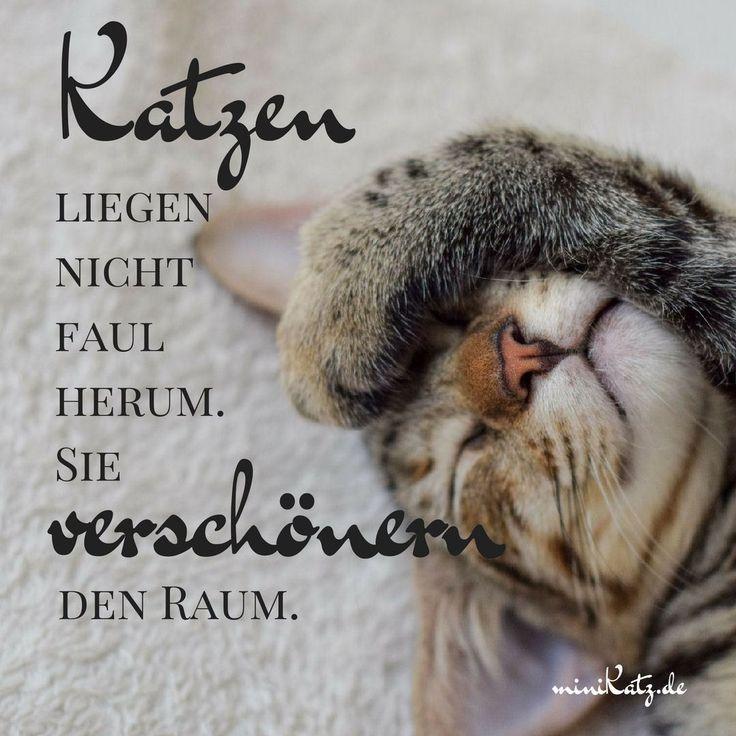 Citações e provérbios: Gatos não estão mentindo preguiçosamente   – Sprüche & Zitate