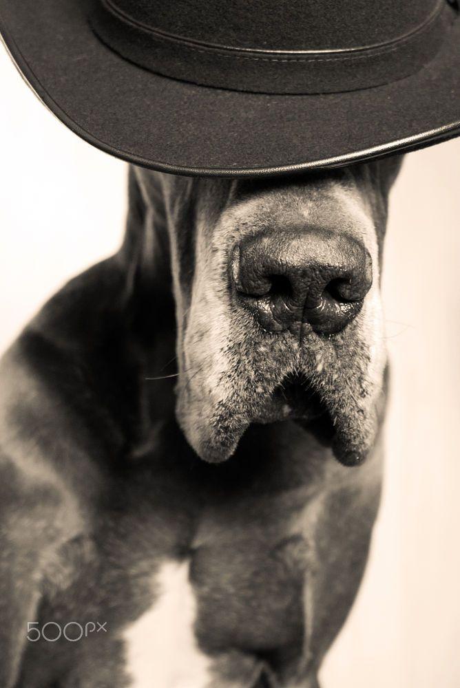 DSC_2766.JPG by Olga Kozina on 500px Great Dane With Hat