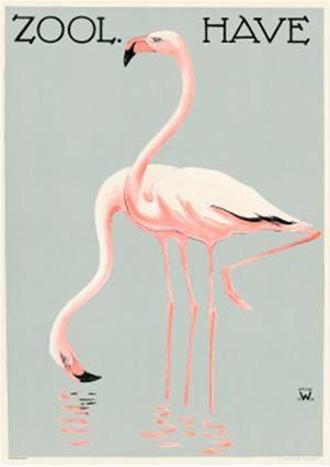 Zoologisk Have - Flamingoer