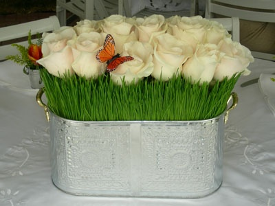 Wheatgrass Centrepiece