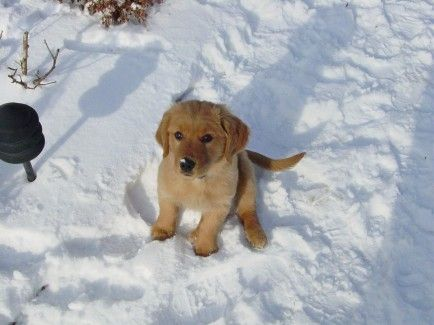 Best Pet Care In Cold Weather Images On Pinterest Dog Beds - 16 animals way chilled even care right now
