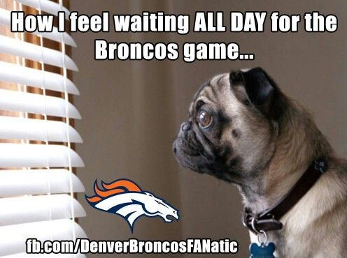 Broncos and pugs! It's too good to be true! #DenverBroncos #Ilovepugs