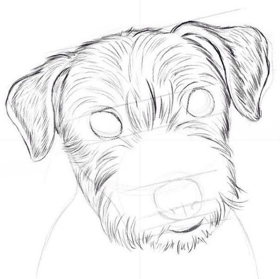 How to draw a dog step by step? - Conand Repair | Drawing dogs ...