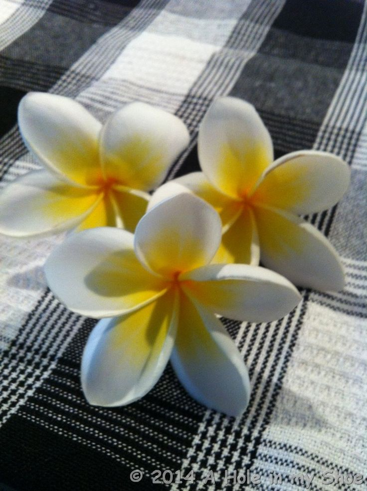 I just love Frangipani (Plumeria), nothing evokes that tropical feeling more than their sweet scent and sheer beauty. The freshly fallen blooms look sensational floating in a pool or bowl of water. The beautiful perfume from these flowers fills the air in Bali. http://www.aholeinmyshoe.com