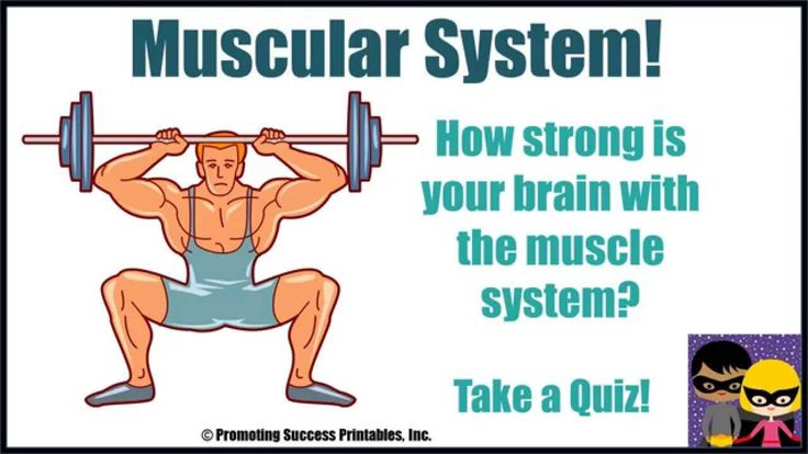 how to keep your muscular system healthy