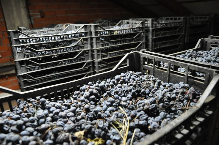 #grapes #passitodiBarbera