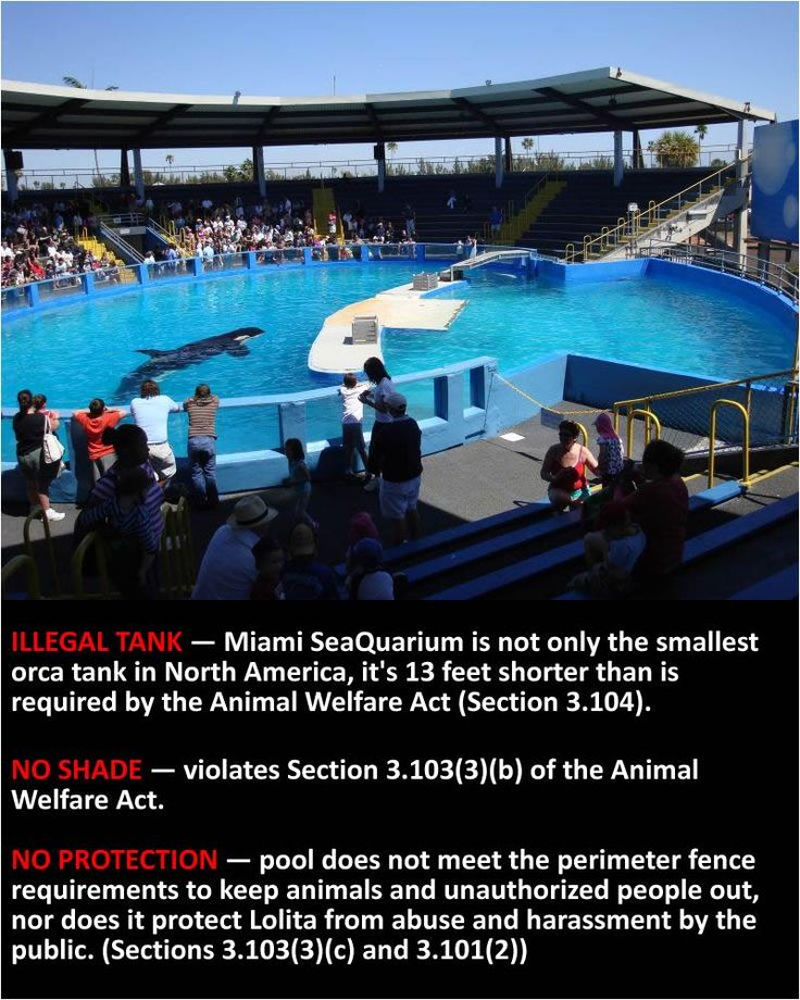 Lolita's prison at the Miami SeaQuarium  the smallest tank in North America  with no shade @TheOrcaProject  pic.twitter.com/NmFDmJHFSK  #blackfish