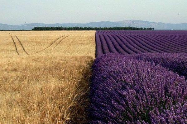 La naturaleza también nos sorprende... #fotos #photoshop #reales #increibles #mundo #planeta #naturaleza