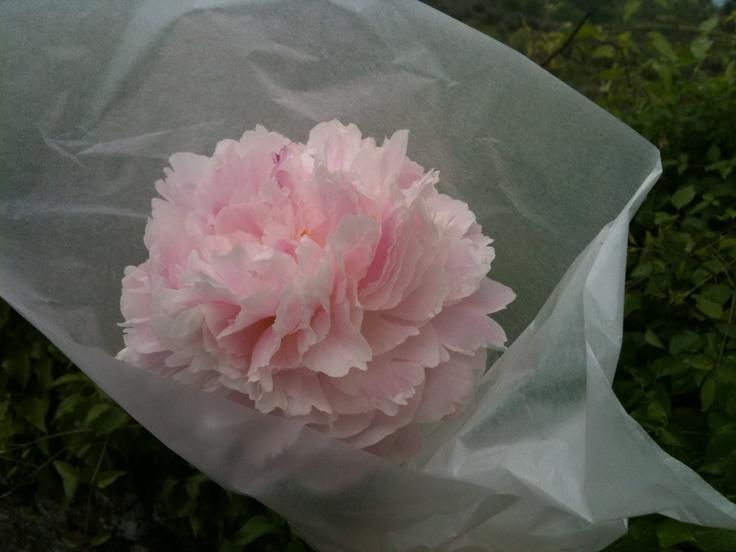 my bouquet. own.