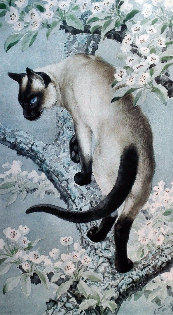 C.F. Tunnicliffe watercolor - Siamese cat on a branch in blossoms