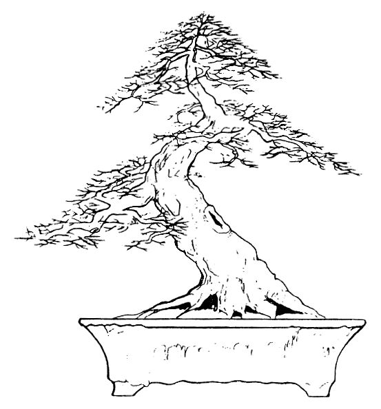 212 best bonsai drawing images on pinterest