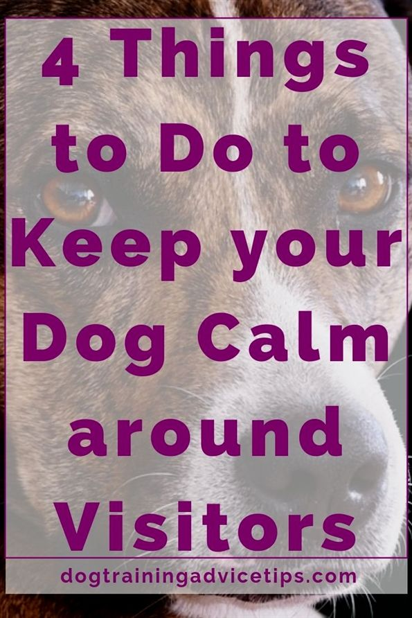 Sanity Saving Tips For Training Your Dog Today Calm Dogs Dog