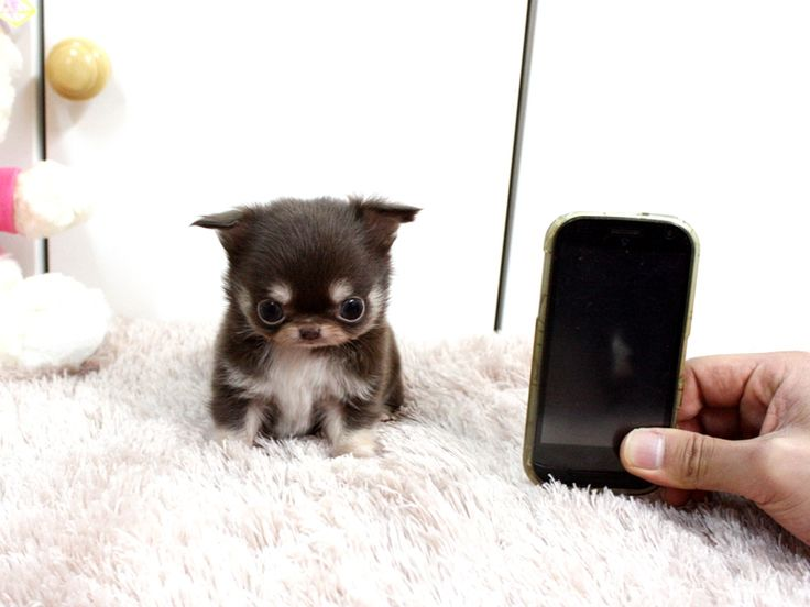 LOL! What?!?! Micro mini teacup puppy of some sort . . . or some weird gerbil/owl cross breed experiment?