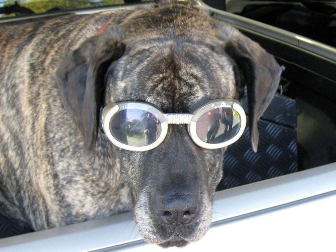 Best Dog Friendly Accommodation | Must do Brisbane
