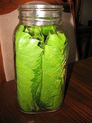 Preserving Grape Vine Leaves in Jars | Kalofagas - Greek Food & Beyond
