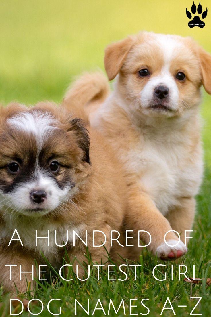 300 Girl Dog Names A Z Girl Dog Names Best Dog Names Cute