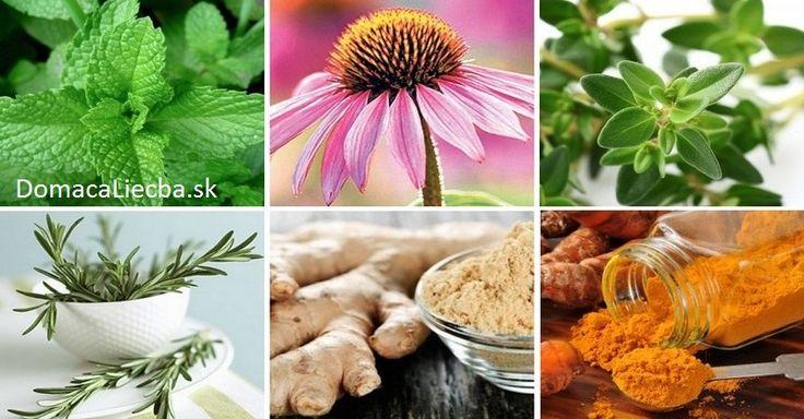 Trápia vás rôzne druhy zápalov a nechcete na ne užívať antibiotiká či lieky proti bolesti? Potom ich týchto 6 byliniek spoľahlivo nahradí.
