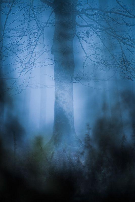 MIST – FORESTE CASENTINESI | MATTEO SIGOLO
