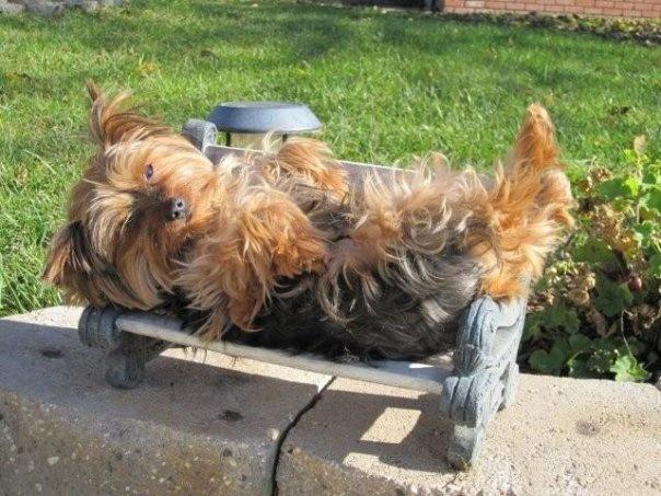 "Rosie ""kicking it"" on her front porch chair!"