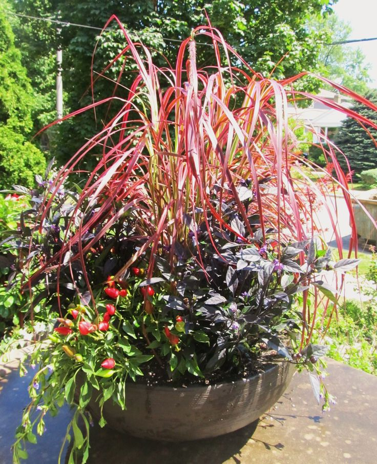 Yup it s time to refresh your summer containers Container PlantsContainer GardeningFall