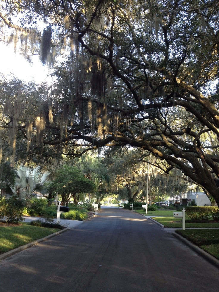 11 best images about temple terrace an awesome place to for Terrace trees