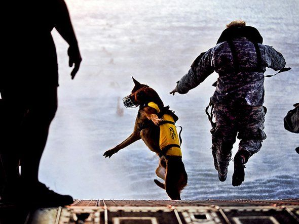 Canine assigned to the 10th Special Forces jumps off the ramp of a CH-47 helicopter during water training over the Gulf of Mexico