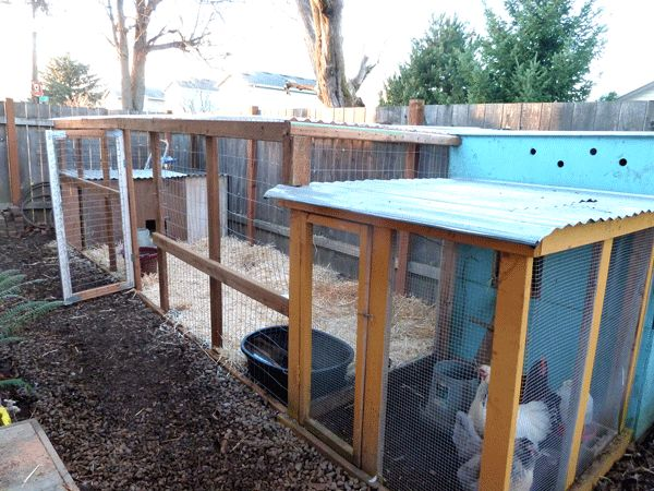 Allow about 4 6 square feet per bird in their duck house for Duck houses and runs