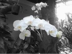 orchid in kebon raya bogor
