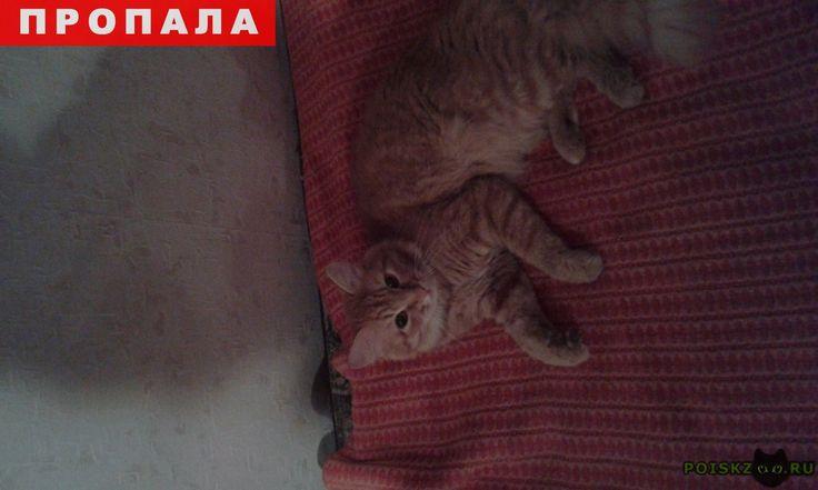 Пропал кот рыжий г.Челябинск http://poiskzoo.ru/board/read24960.html  POISKZOO.RU/24960 в начале апреля пропал на с/з кот с желтыми глазами если кто то видел или нашли просьба вернуть. Ребенок плачит, все время просит рыжего, хотели взять котенка не принимает  РЕПОСТ! @POISKZOO2 #POISKZOO.RU #Пропала #кошка #Пропала_кошка #ПропалаКошка #Челябинск