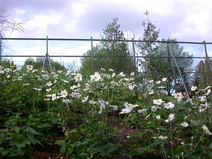 Les 97 meilleures images propos de gilles cl ment for Jardin quai branly