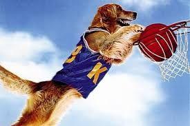 Αποτέλεσμα εικόνας για basketball