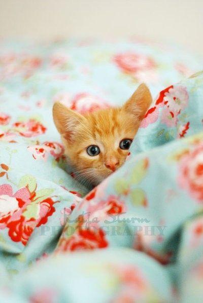 ♥ hiding kitten